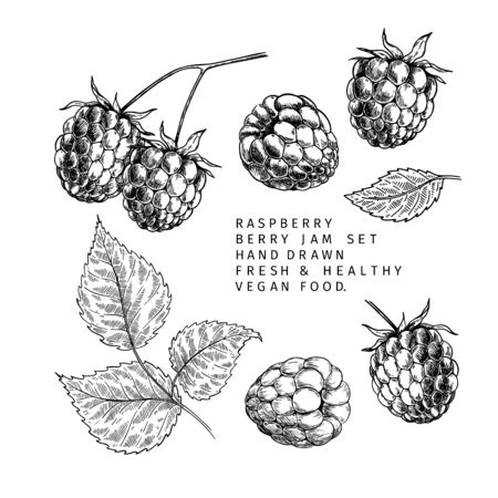 Hand drawn raspberry branch, leaf and berry. Engraved vector illustration. Bramble agriculture plant. Summer harvest, jam or mamalade vegan ingredient. Menu, package, cosmetic and food design Ilustrace