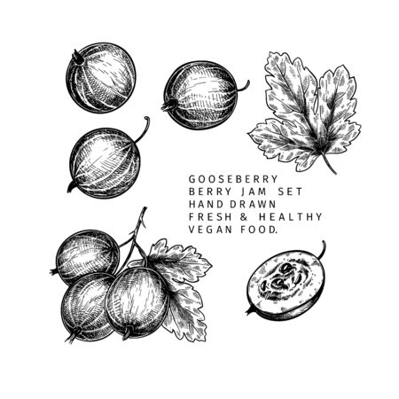 Hand drawn gooseberry branch, leaf and berry. Engraved vector illustration. Dewberry agriculture plant. Summer harvest, jam or mamalade vegan ingredient. Menu, package, cosmetic and food design