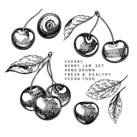 Hand drawn cherry branch, leaf and berry. Engraved vector illustration. Bird berry, merry agriculture plant. Summer harvest, jam or mamalade vegan ingredient. Menu, package, cosmetic and food design Ilustrace