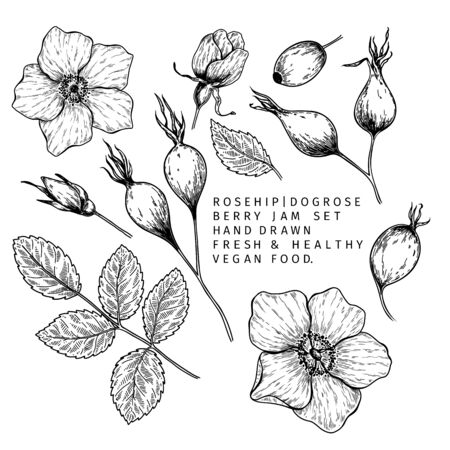 Hand drawn wild rose branch, leaf, flower and berry. Engraved vector illustration. Dog rose, rosehip plant. Summer harvest, jam or mamalade vegan ingredient. Menu, package, cosmetic and food design
