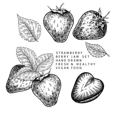Hand drawn strawberry branch, leaf and berry. Engraved vector illustration. Agricultural plant. Summer harvest, jam or mamalade organic vegan ingredient. For menu, package, cosmetic and food design