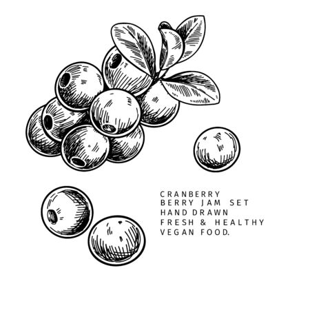 Hand drawn cranberry branch, leaf and berry. Engraved vector illustration. Cowberry, blueberry wild plant. Summer harvest, jam or marmalade vegan ingredient. Menu, package, cosmetic and food design Ilustração
