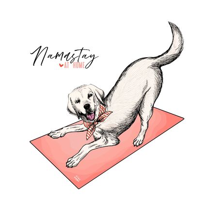 Hand drawn labrador retriever dog lies on yoga matt. Stay home. Vector engraved quarantine poster. Stay active, stay at home. Covid-19 pandemic flyer. Thrilled dog asana. Namaste