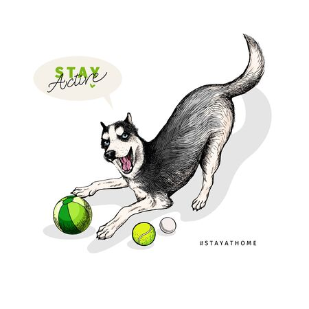 Hand drawn siberian husky dog plays fetch with balls. Stay home. Vector engraved quarantine poster. Stay active, stay at home. Covid-19 pandemic flyer. Ilustração
