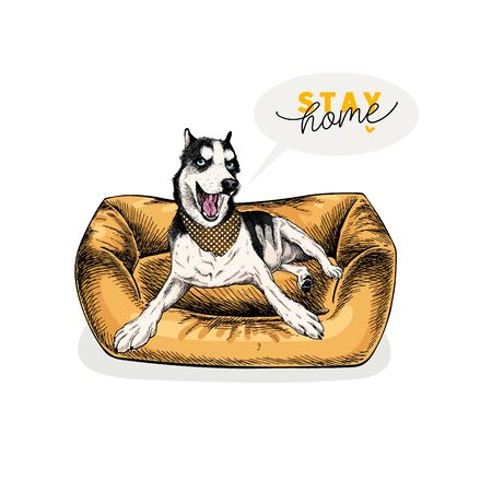 Hand drawn siberian husky dog lies in modern pet furniture. Stay home. Vector engraved quarantine poster. Stay chick, stay at home. Covid-19 pandemic flyer. Dog bed decoration Ilustração
