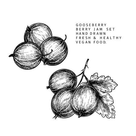 Hand drawn gooseberry branch, leaf and berry. Engraved vector illustration. Dewberry agriculture plant. Summer harvest, jam or marmalade vegan ingredient. Menu, package, cosmetic and food design Vektorgrafik