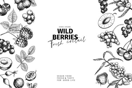 Hand drawn wild berry mix. Cherry, Gooseberry, raspberry, black currant, plum, rosehip, guelder rose, sea buckthorn, strawberry. Vector fresh vegan food banner. Package design restaurant flyer