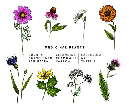 Hand drawn wild hay flowers. Medical herbs and plants.Colored Calendula, Chamomile, Cornflower, Celandine, Cosmos, Yarrow, Thistle, Echinacea. Engraved Cosmetic essential oil package herbal medicine