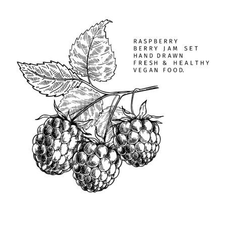 Hand drawn raspberry branch, leaf and berry. Engraved vector illustration. Bramble agriculture plant. Summer harvest, jam or marmalade vegan ingredient. Menu, package, cosmetic and food design Ilustração