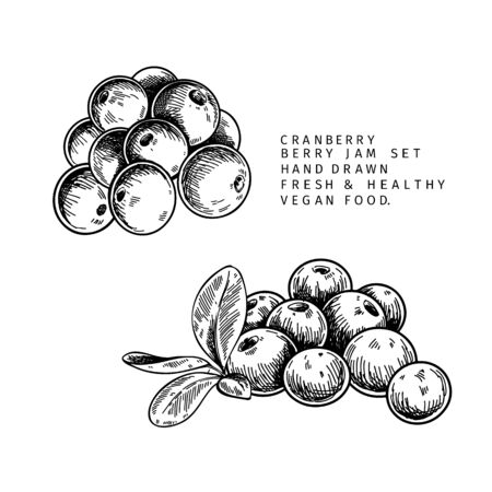 Hand drawn cranberry branch, leaf and berry. Engraved vector illustration. Cowberry, blueberry wild plant. Summer harvest, jam or marmalade vegan ingredient. Menu, package, cosmetic and food design