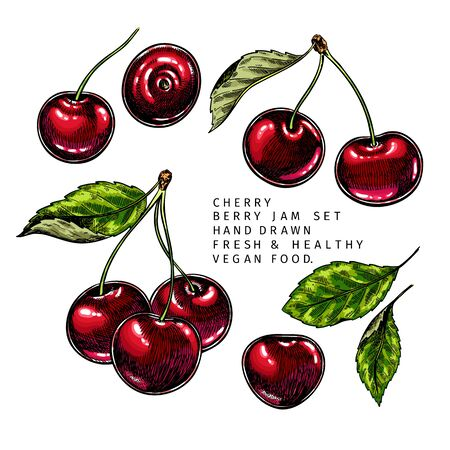 Hand drawn cherry branch, leaf and berry. Engraved colored vector illustration. Bird berry agriculture plant. Summer harvest, jam or marmalade vegan ingredient. Menu, package, cosmetic, food design Ilustração