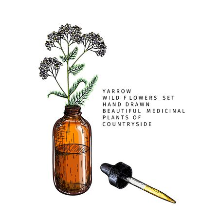Hand drawn set of essential oils. Vector yarrow milfoil flower. Medicinal herb with glass dropper bottle. Colored engraved art. Cosmetics, medicine, treating, aromatherapy, package design health care Ilustração
