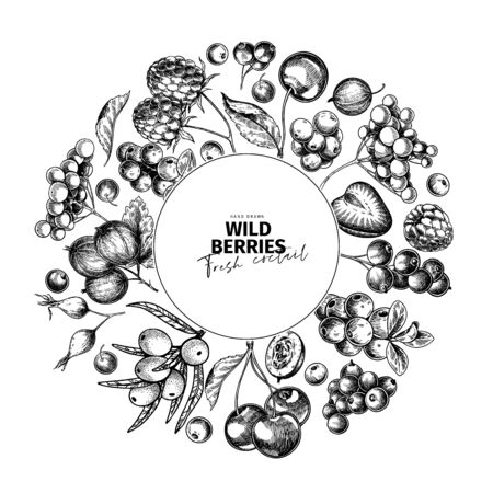 Hand drawn wild berry. Cherry, gooseberry, cranberry, raspberry, black currant, plum, rosehip, guelder rose, sea buckthorn, grape, strawberry Vector vegan food banner Package design restaurant Vettoriali