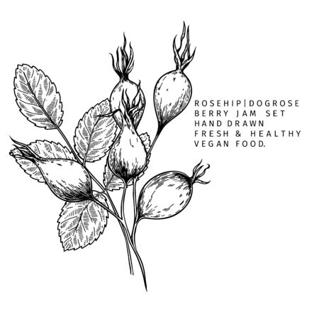 Hand drawn wild rose branch, leaf, flower and berry. Engraved vector illustration. Dog rose, rosehip plant. Summer harvest, jam or marmalade vegan ingredient. Menu, package, cosmetic and food design