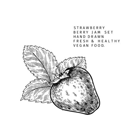 Hand drawn strawberry branch, leaf and berry. Engraved vector illustration. Agricultural plant. Summer harvest, jam or marmalade organic vegan ingredient. For menu, package, cosmetic and food design