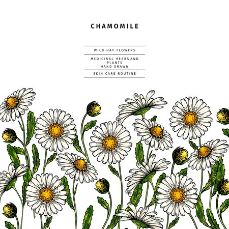 Hand drawn wild hay flowers. Chamomile daisy flower. Medical herb. Colored engraved art. Border composition. Good for cosmetics, medicine, treating, aromatherapy, nursing, package design health care