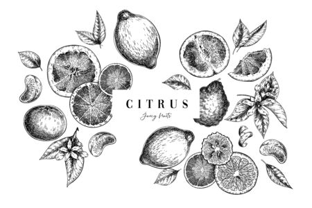 Hand drawn exotic citrus fruits. Vector orange, lemon, grapefruit, mandarine, tangerine, lime, bergamot, whole and sliced with leaf and blossom. Engraved illustration. Menu, package cosmetic design