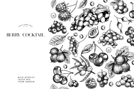 Hand drawn wild berry. Cherry, gooseberry, cranberry, raspberry, black currant, plum, rosehip, guelder rose, sea buckthorn, grape, strawberry Vector vegan food banner Package design restaurant Ilustração