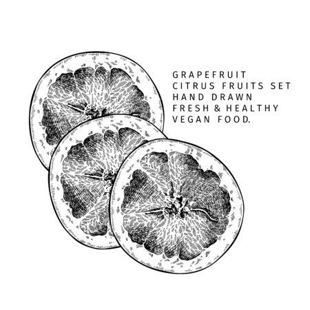 Hand drawn grapefruit fruit and leaf. Engraved vector illustration. Sweet citrus exotic plant. Summer harvest, jam or marmalade vegan ingredient. Menu, package, cosmetic, food design Banco de Imagens - 147740531
