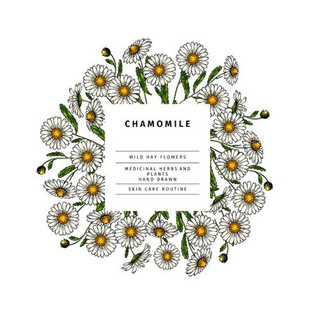 Hand drawn wild hay flowers. Chamomile daisy flower. Medical herb. Colored engraved art. Round composition. Good for cosmetics, medicine, treating, aromatherapy, nursing, package design health care