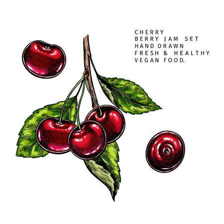 Hand drawn cherry branch, leaf and berry. Engraved colored vector illustration. Bird berry agriculture plant. Summer harvest, jam or marmalade vegan ingredient. Menu, package, cosmetic, food design Banco de Imagens - 147891306
