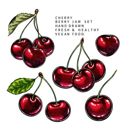 Hand drawn cherry branch, leaf and berry. Engraved colored vector illustration. Bird berry agriculture plant. Summer harvest, jam or marmalade vegan ingredient. Menu, package, cosmetic, food design Vettoriali