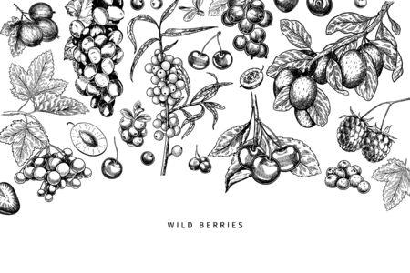 Hand drawn wild berry. Cherry, gooseberry, cranberry, raspberry, black currant, plum, rosehip, guelder rose, sea buckthorn, grape, strawberry Vector vegan food banner Package design restaurant Ilustração