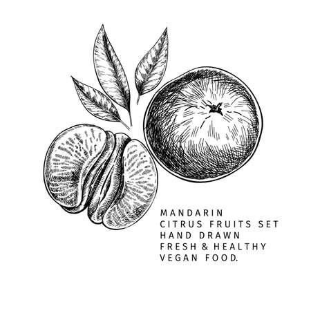 Hand drawn mandarin fruits, whole and sliced, leaves and blossom. Vector illustration of tangerine. Citrus sweet vegetarian food. Good for restaurant menu, package design, food banner Ilustração