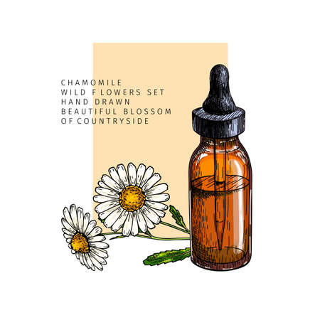 Hand drawn set of essential oils. Vector colored camomile flower. Medicinal herb with glass dropper bottle. Engraved art. For cosmetics, medicine, treating, aromatherapy, package design healthcare