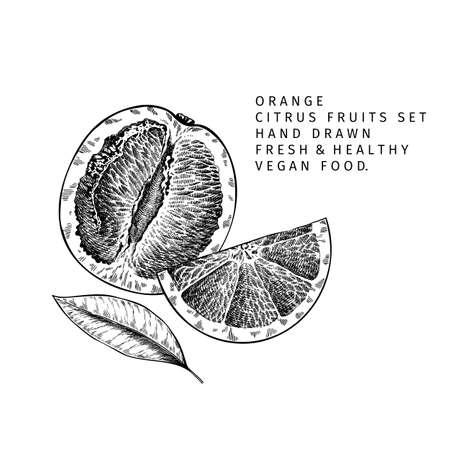 Hand drawn orange fruit and leaf. Engraved vector illustration. Sweet citrus exotic plant. Summer harvest, jam or marmalade vegan ingredient. Menu, package, cosmetic, food design
