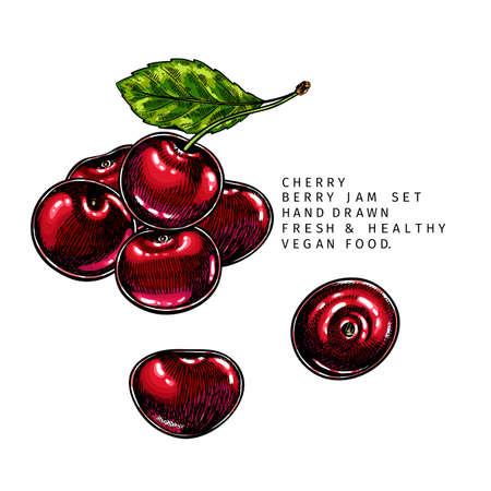 Hand drawn cherry branch, leaf and berry. Engraved colored vector illustration. Bird berry agriculture plant. Summer harvest, jam or marmalade vegan ingredient. Menu, package, cosmetic, food design Ilustração