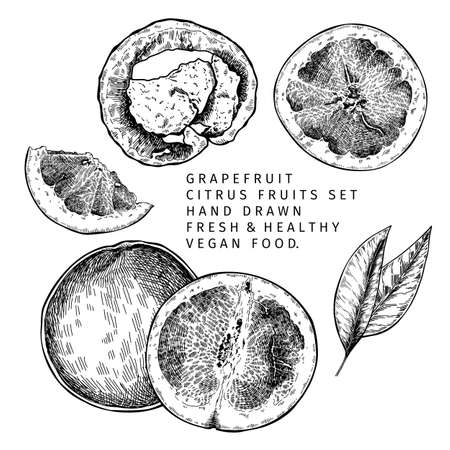 Hand drawn grapefruit fruit and leaf. Engraved vector illustration. Sweet citrus exotic plant. Summer harvest, jam or marmalade vegan ingredient. Menu, package, cosmetic, food design