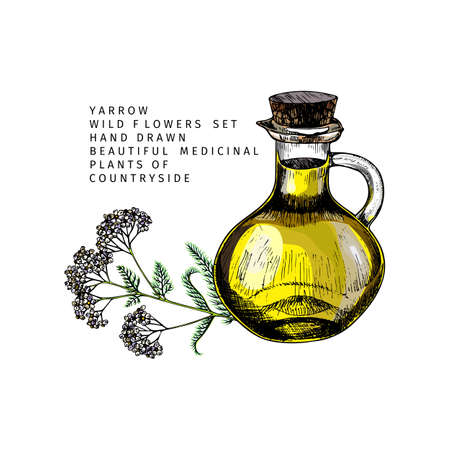 Hand drawn set of essential oils. Vector yarrow milfoil flower. Medicinal herb with glass dropper bottle. Colored engraved art. Cosmetics, medicine, treating, aromatherapy, package design health care 向量圖像