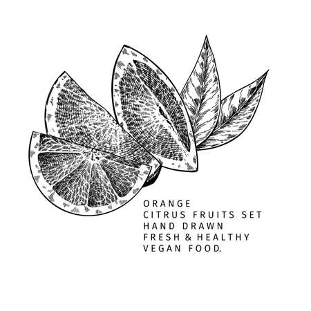 Hand drawn orange fruit and leaf. Engraved vector illustration. Sweet citrus exotic plant. Summer harvest, jam or marmalade vegan ingredient. Menu, package, cosmetic, food design