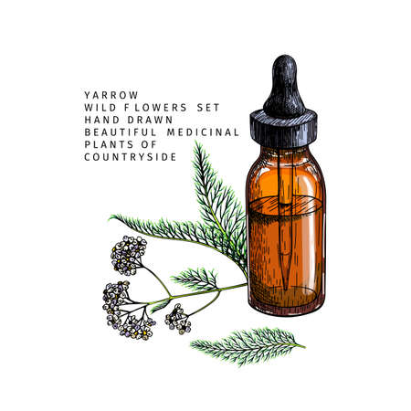 Hand drawn set of essential oils. Vector yarrow milfoil flower. Medicinal herb with glass dropper bottle. Colored engraved art. Cosmetics, medicine, treating, aromatherapy, package design health care Ilustracja