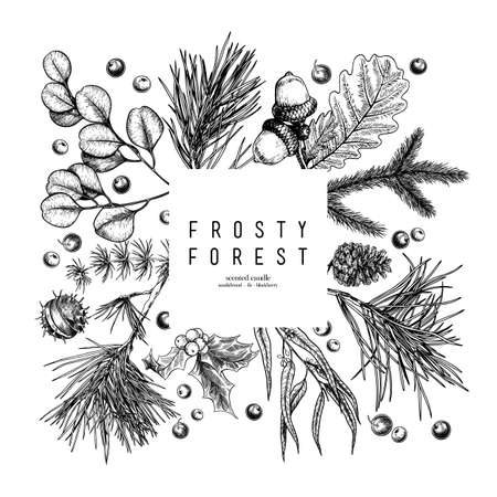 Hand drawn detailed Christmas banner. Vector forest pine, cone, mistletoe, holly, accorn, berries. Xmas, New Year minimalist design. Holiady sale, advertisement, shop promotion brand merchandising 矢量图像