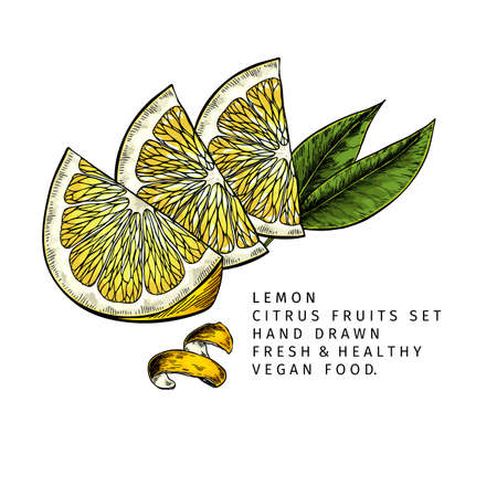 Hand drawn lemon slices and leaf. Engraved vector illustration. Sour citrus exotic plant. Summer harvest, jam or cocktail vegan ingredient. Menu, package, cosmetic, food design Çizim