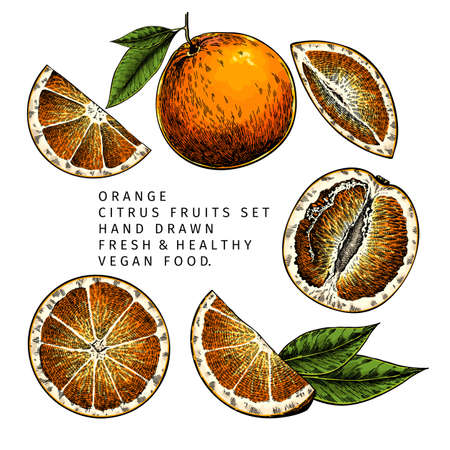 Hand drawn orange fruit whole and sliced, leaves. Engraved vector illustration. Sweet citrus exotic plant. Summer harvest, jam or cocktail vegan ingredient. Menu, package, cosmetic, food design Çizim
