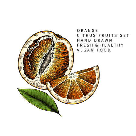 Hand drawn sliced orange fruit and leaf. Engraved vector illustration. Sweet citrus exotic plant. Summer harvest, jam or cocktail vegan ingredient. Menu, package, cosmetic, food design