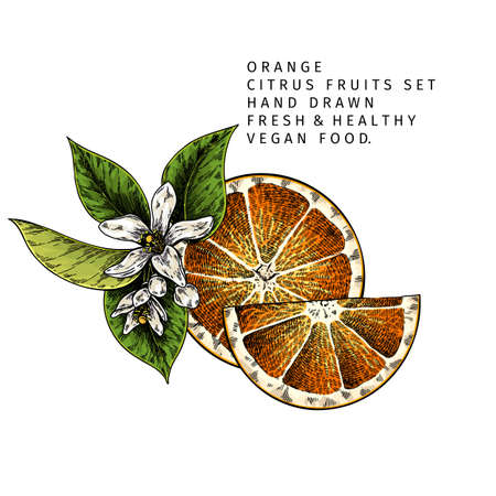 Hand drawn orange fruit slices and blossom. Engraved vector illustration. Sweet citrus exotic plant. Summer harvest, jam or cocktail vegan ingredient. Menu, package, cosmetic, food design Çizim