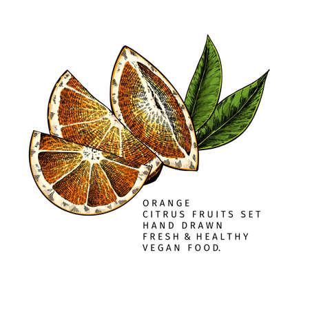 Hand drawn orange fruit slices and leaf. Engraved vector illustration. Sweet citrus exotic plant. Summer harvest, jam or cocktail vegan ingredient. Menu, package, cosmetic, food design