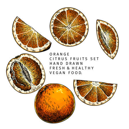 Hand drawn orange fruit whole and sliced. Engraved vector illustration. Sweet citrus exotic plant. Summer harvest, jam or cocktail vegan ingredient. Menu, package, cosmetic, food design Çizim