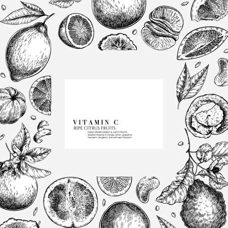 Citrus fruit set. Hand drawn orange, lemon, grapefruit, mandarin, lime, bergamot, leaves with bloosm and branches. Vector engraved composition Restaurant branding, cosmetic package design, menu Çizim