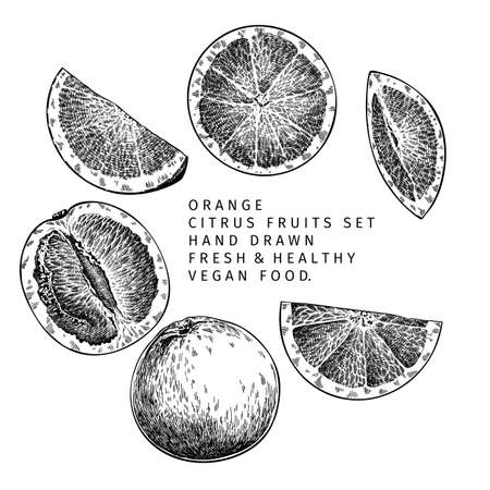 Hand drawn orange fruit and leaf. Engraved vector illustration. Sweet citrus exotic plant. Summer harvest, jam or marmalade vegan ingredient. Menu, package, cosmetic, food design Ilustración de vector
