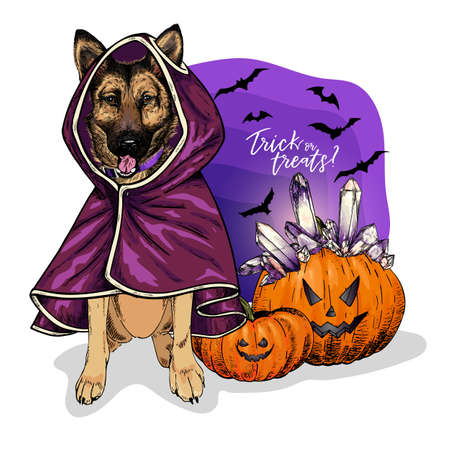 Vector portrait of german shepherd dog wearing coat and pumpkins with crystal crown. Halloween illustration.Trick or treats. Hand drawn pet portait. Poster, print, postcard, seasonal greeting. Ilustração