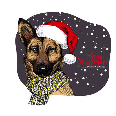 Hand drawn portrait of german shepherd dog wearing Santa hat and knitted scarf. Vector Christmas poster. Xmas greeting card. Winter seasonal celebration. Colored new year pet portrait