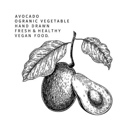 Hand drawn half and sliced avocado. Vector colored engraved illustration. Natural orgainc vegetable. Food healthy ingredient. For cooking, cosmetic package design, medicinal herb, treating, healtcare