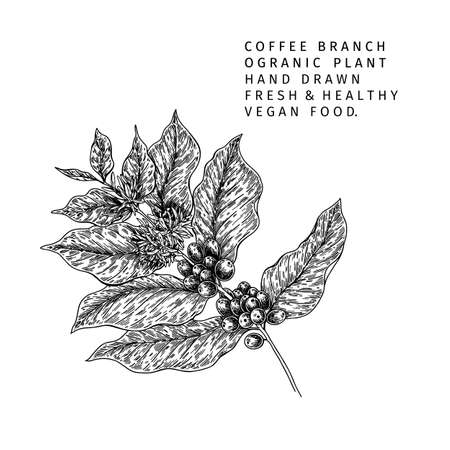 Coffee set. Hand drawn coffee tree branch with berries and leaves. Vector engraved icon. Morning fresh drink. For restaurant and cafe menu, coffee shop flyer, banner design template