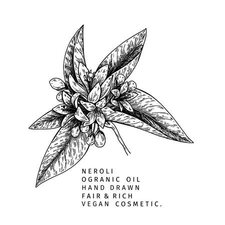 Hand drawn neroli branch. Vector floral engraved illustration. Cosmetic and medical essential oil. Citrus orange blossom. Cosmetic package design, medicinal herb, treating, aromatherapy. Ilustração
