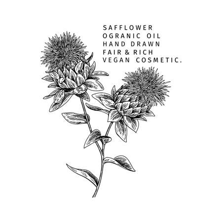 Hand drawn safflower branch. Vector engraved illustration. Spicy aromatic herb. Food ingredient, aromatherapy, cooking. For cosmetic package design, medicinal plant, treating, healthcare.
